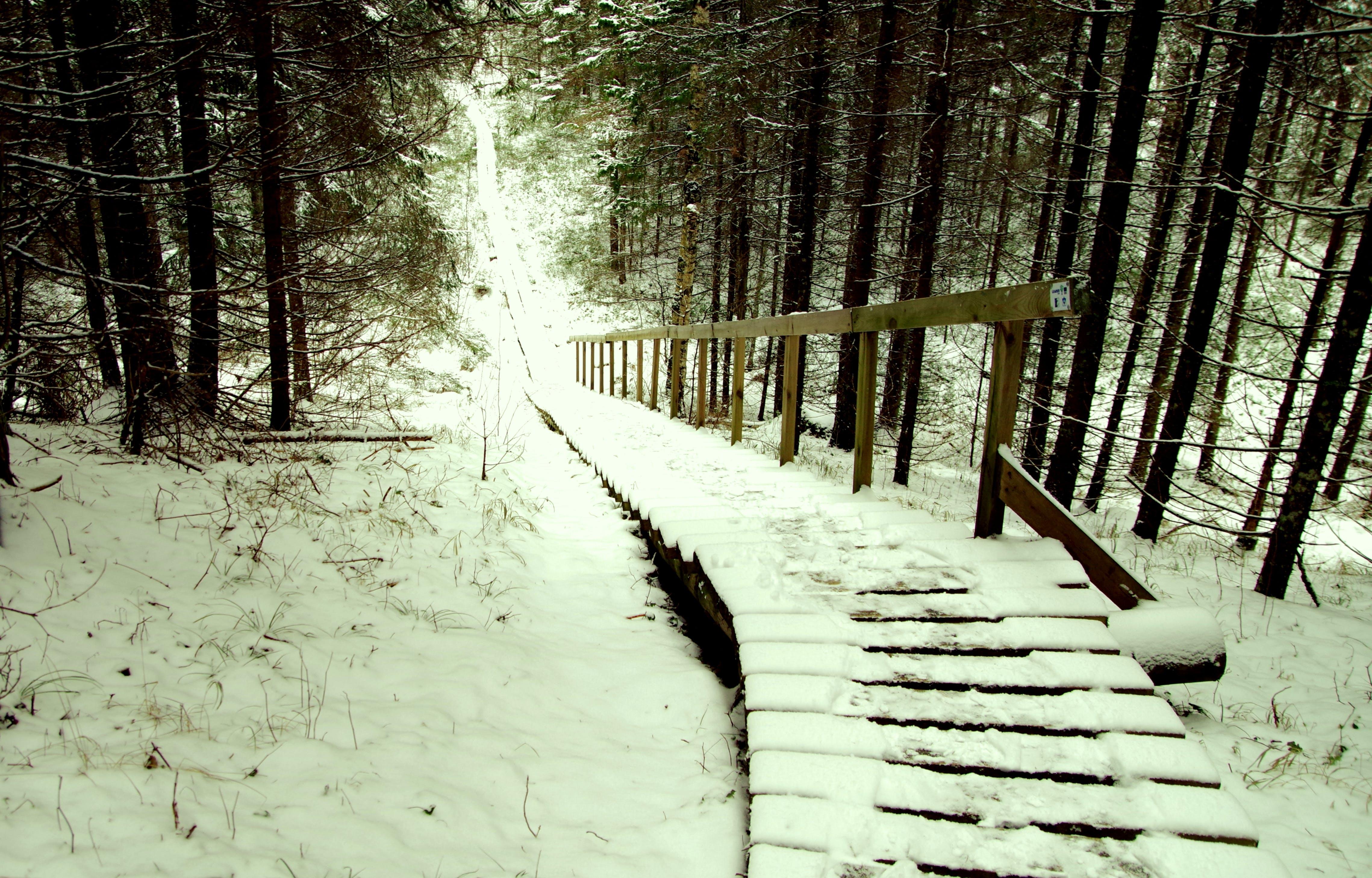 drzewa, las, lód
