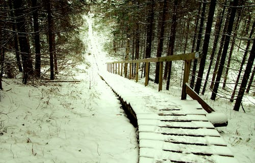 Brown Wooden Stairs Covered With Snow