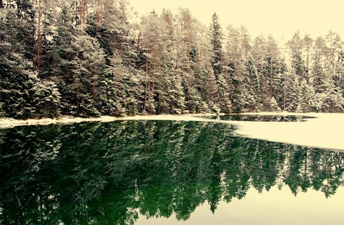 Immagine gratuita di acqua, alba, alberi, albero