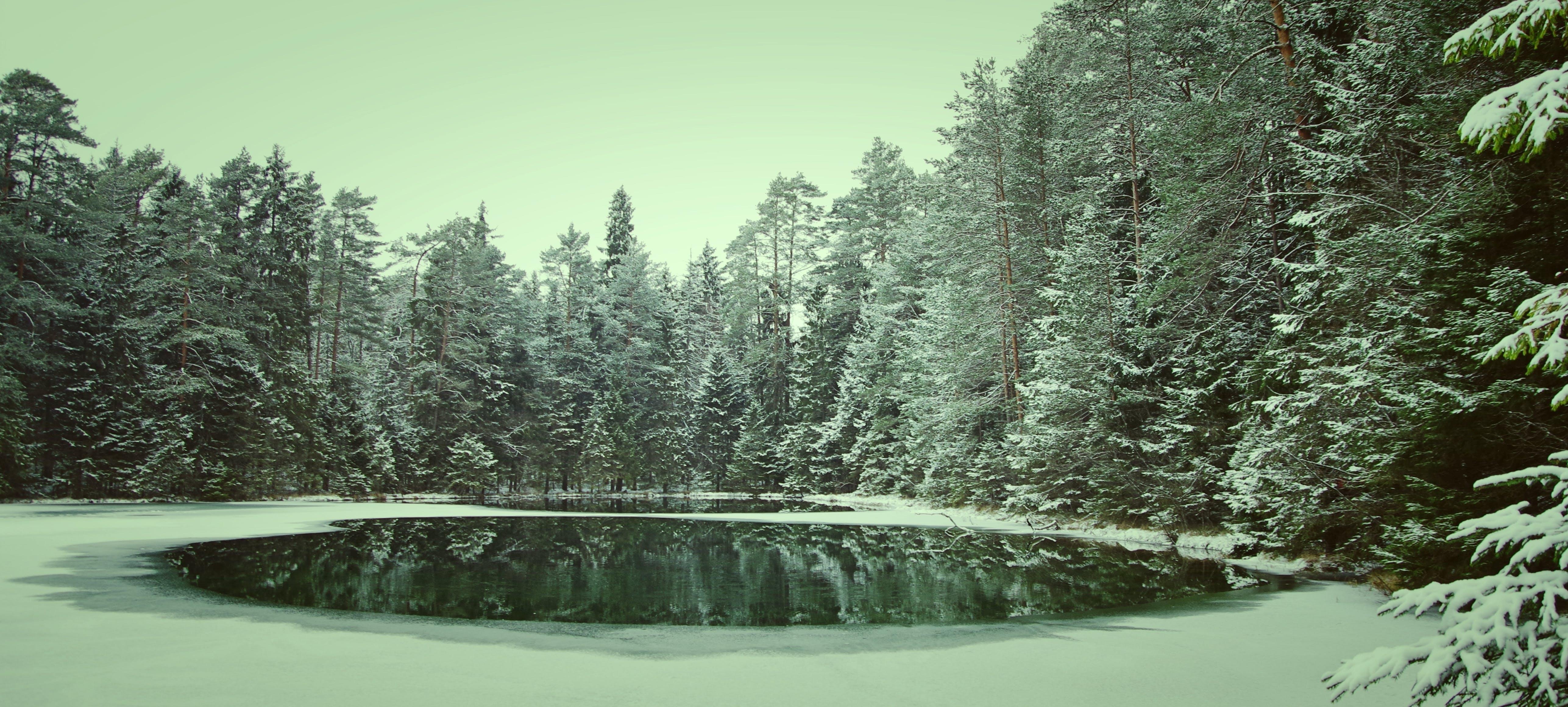 Foto d'estoc gratuïta de aigua, amb boira, arbre, arbres