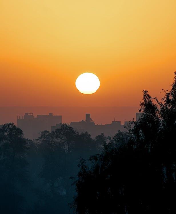 나무, 새벽, 오렌지