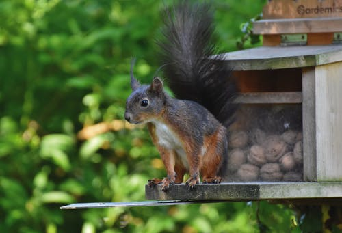 Brown Squirrel on Black Metal Fence