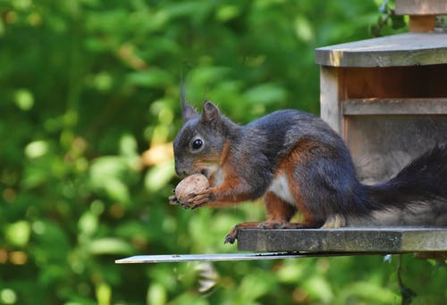 Brown and Black Squirrel on Brown Wooden Fence