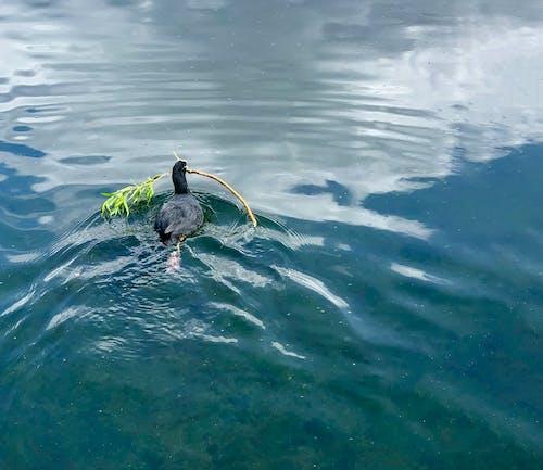 Free stock photo of and, aquatic, birth