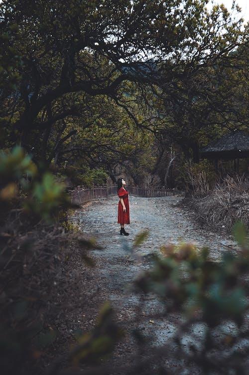 Foto profissional grátis de alameda, ao ar livre, árvore
