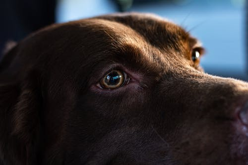 ソウルフル, 動物の目, 待っているの無料の写真素材