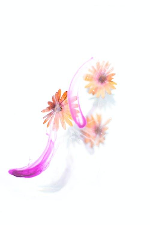 관념적인, 꽃, 꽃무늬의 무료 스톡 사진