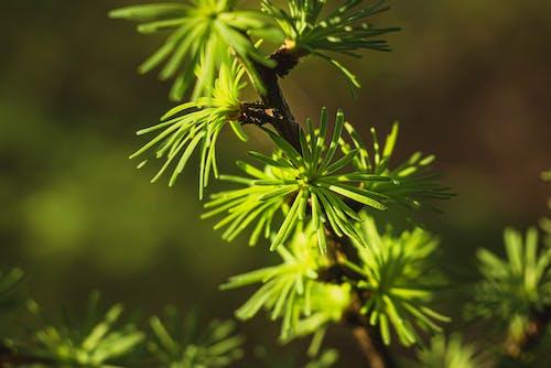 Fotos de stock gratuitas de botánico, crecer, flora