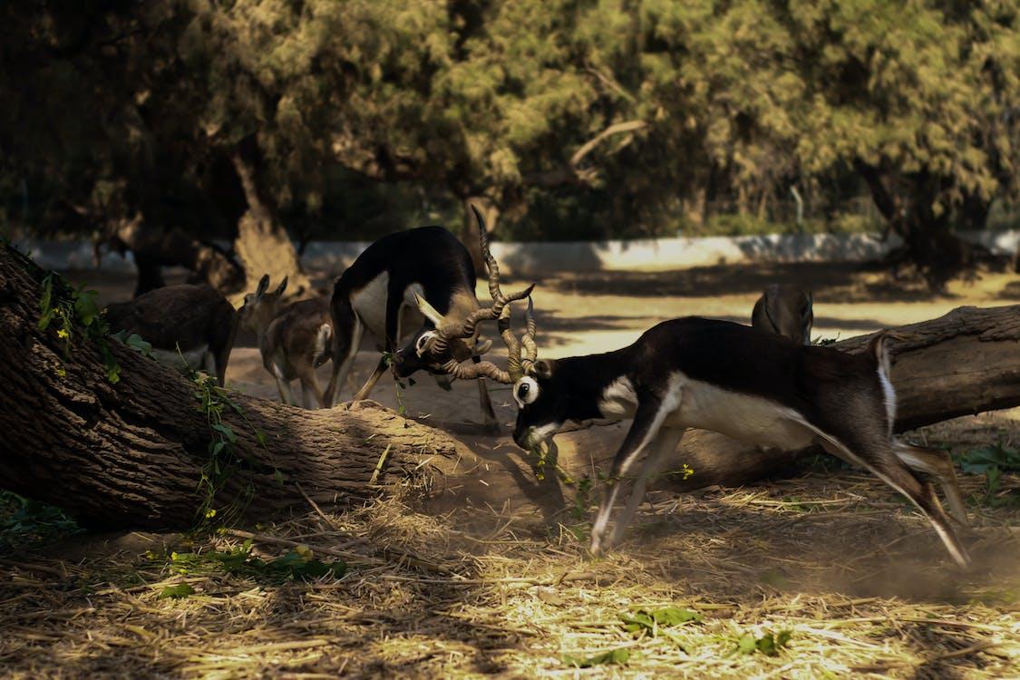 パーク, 動物, 動物の写真