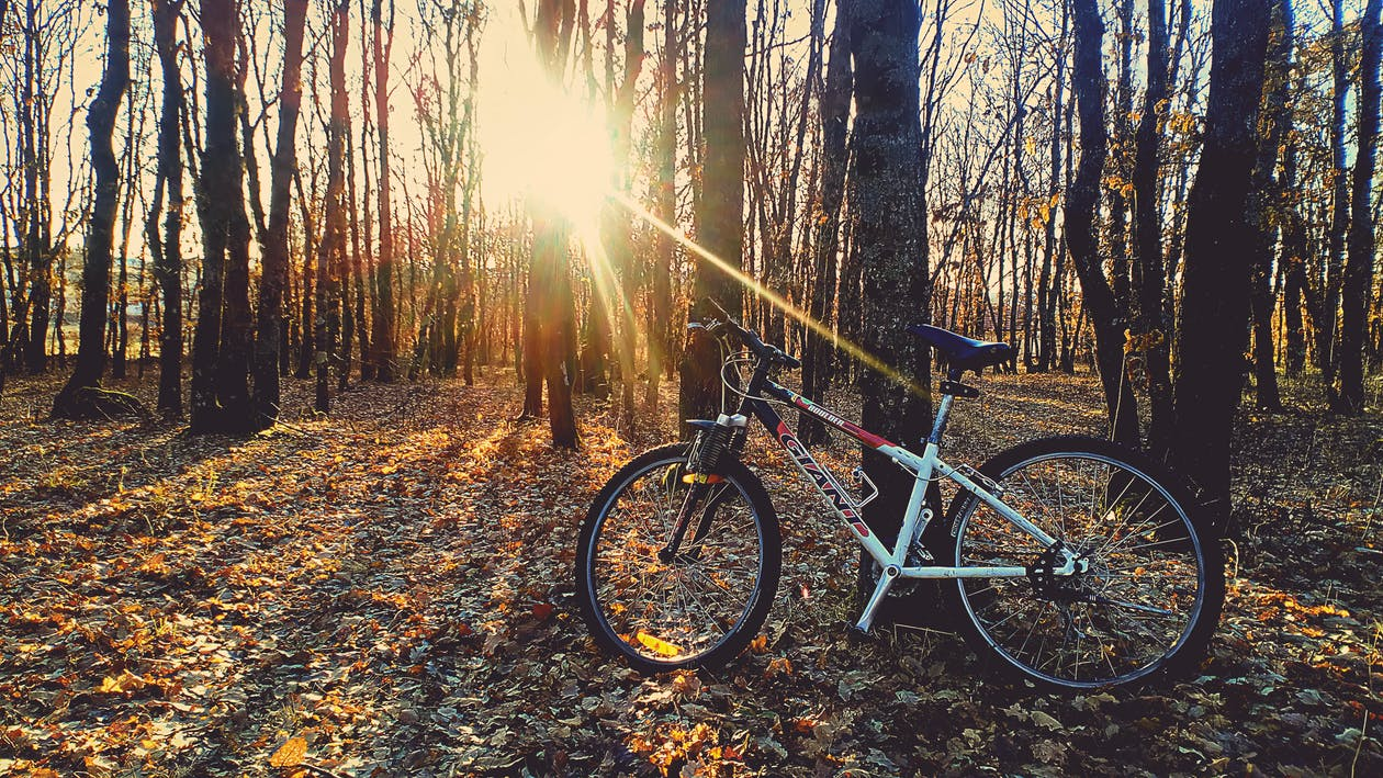 ağaçlar, bisiklet, çevre