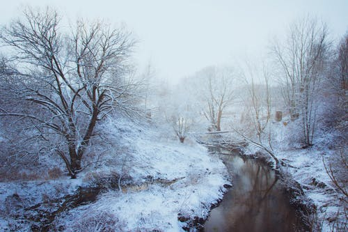 Immagine gratuita di acqua, alberi, biancaneve, boschi