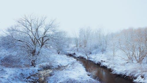 개울, 겨울, 경치, 눈의 무료 스톡 사진