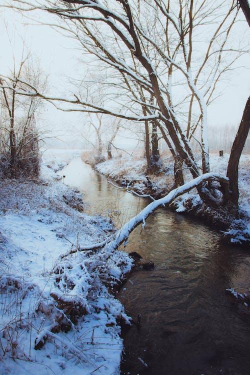 감기, 개울, 겨울, 경치의 무료 스톡 사진