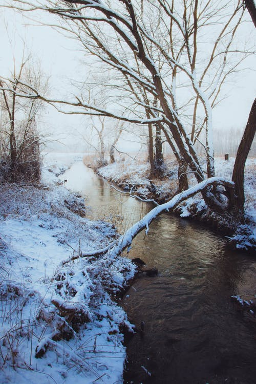 Brown Bare Tree Near River Covered in Snow