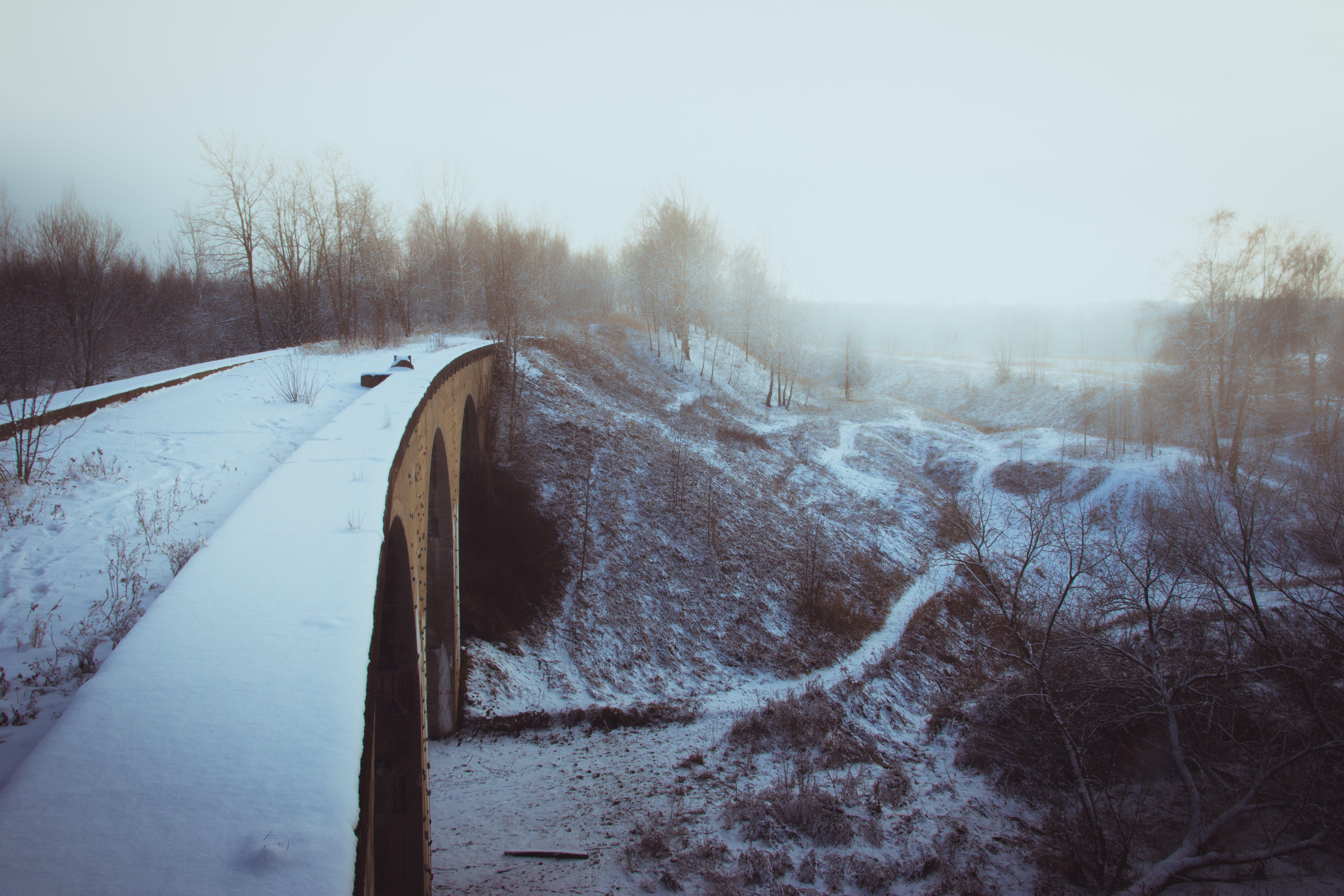 Gratis lagerfoto af bro, buer, dagtimer, forkølelse