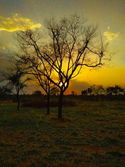 Photos gratuites de arbres nus, arbres sans feuilles, aube