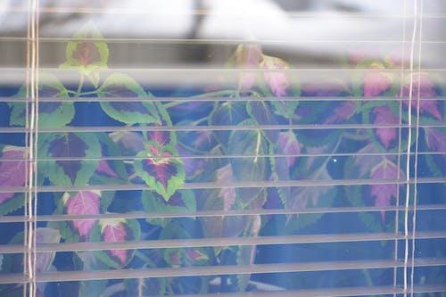 Fotobanka sbezplatnými fotkami na tému krása okna, sklenené okno