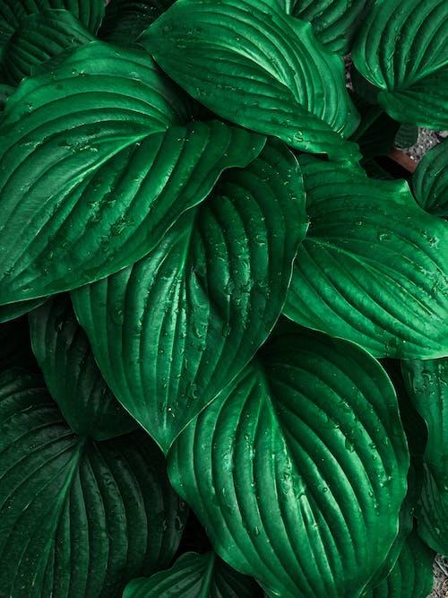 Fotobanka sbezplatnými fotkami na tému botanický, botanika, kvapky rosy