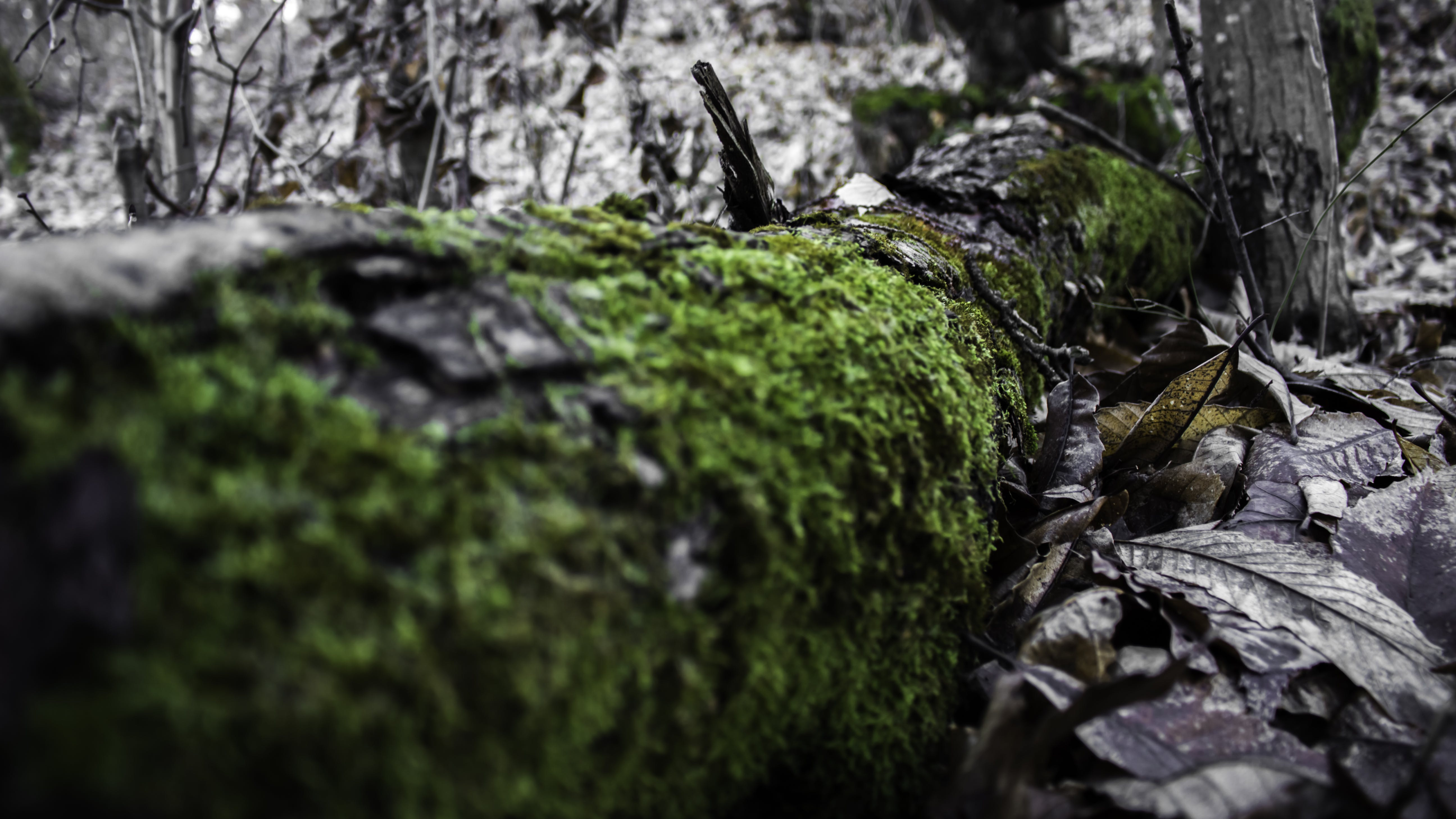 Free stock photo of blackwoods, forest, sky, tree