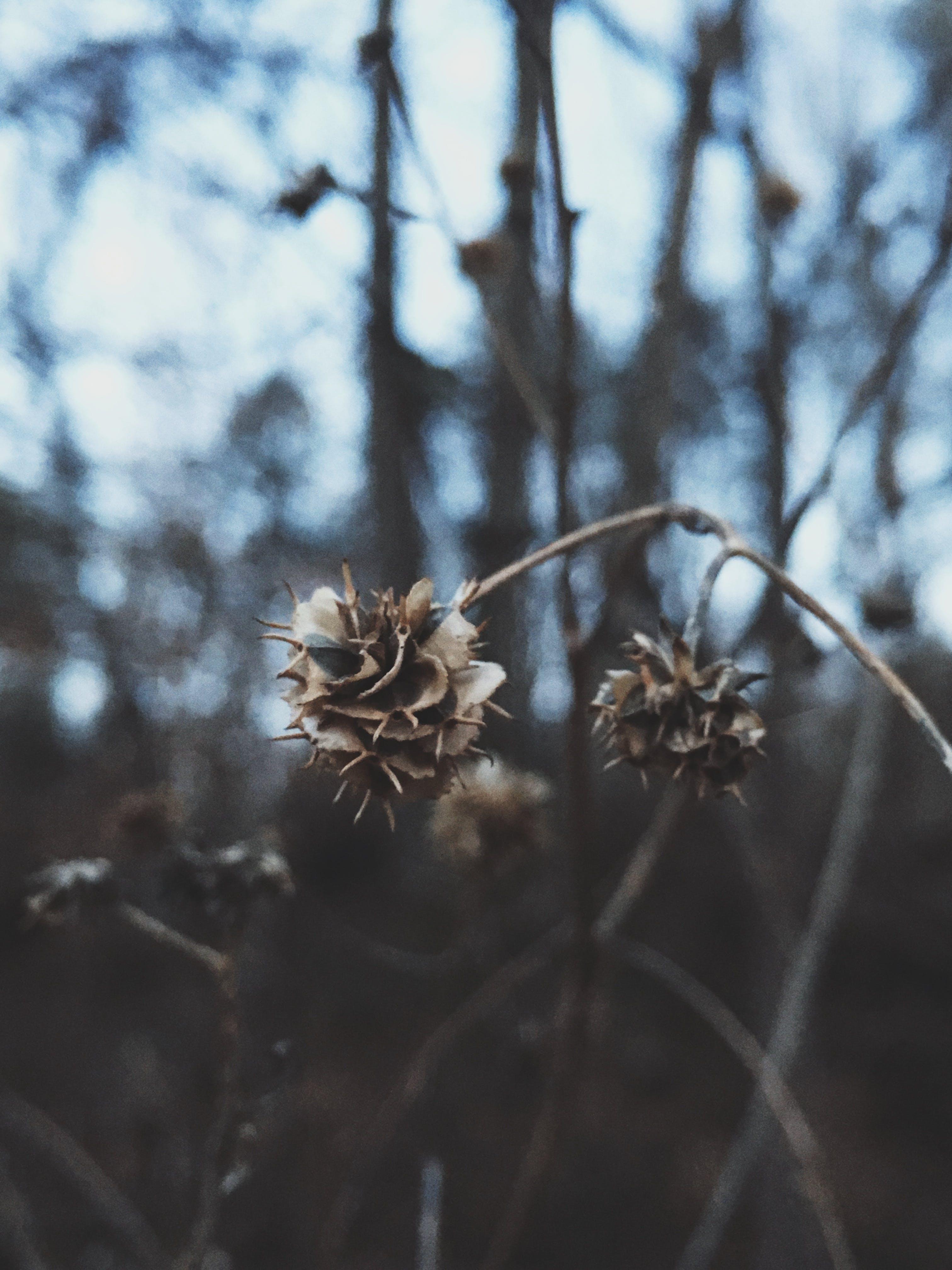 가지, 건조한, 경치, 꽃의 무료 스톡 사진
