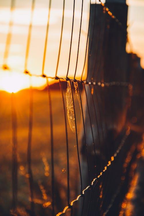 日落, 籬笆, 草地 的 免費圖庫相片