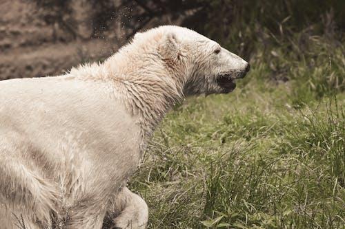 Photos gratuites de animal, clairière, espace extérieur