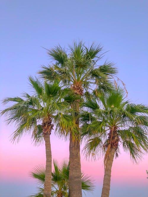 Green Palm Tree Under a Blue Sky