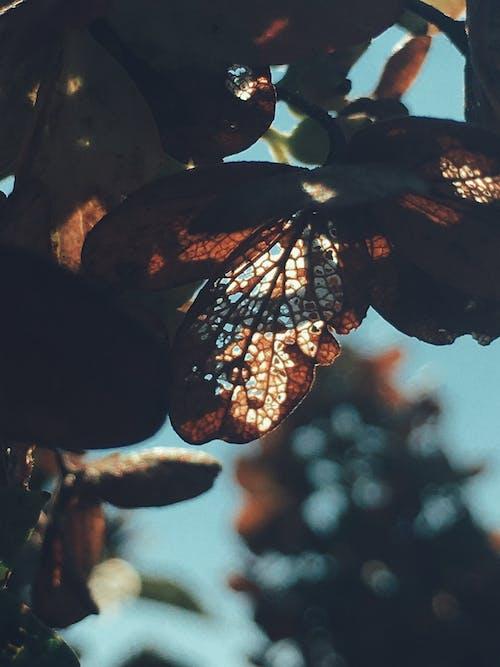 คลังภาพถ่ายฟรี ของ กลางวัน, ซิลูเอตต์, แมโคร, ใบไม้