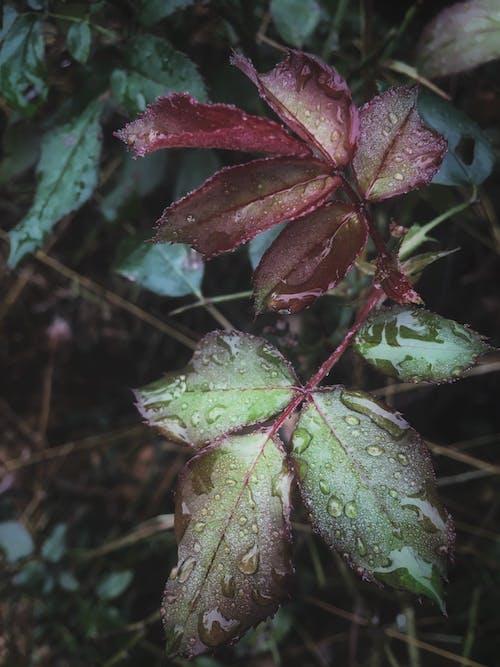 Photos gratuites de couleurs, croissance, eau, environnement