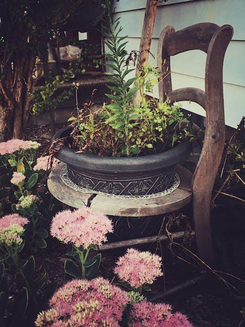 ahşap, avlu, Bahçe, bitki örtüsü içeren Ücretsiz stok fotoğraf