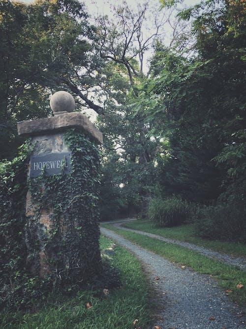 Бесплатное стоковое фото с деревья, дневное время, дневной свет, дорога