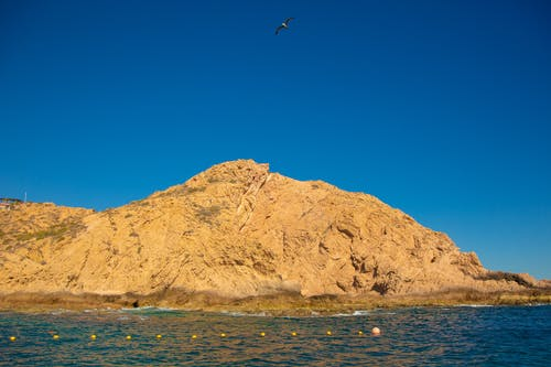 Free stock photo of beach, beatiful landscape, bird flying
