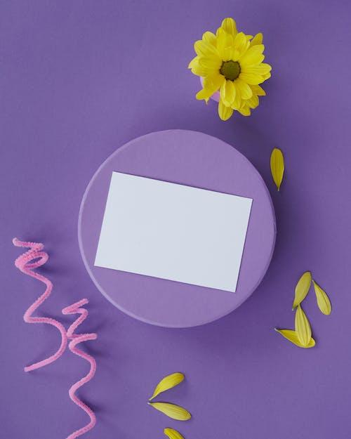 Kostenloses Stock Foto zu blume, blütenblätter, flatlay