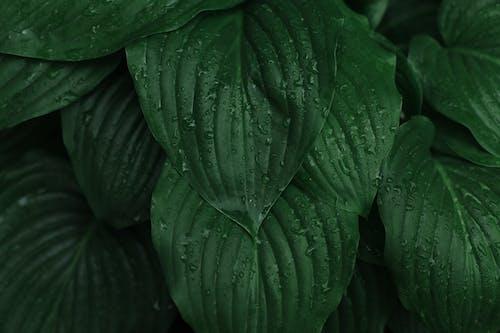 Fotobanka sbezplatnými fotkami na tému jeseň, kvapôčky vody, listy