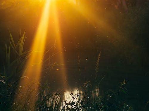 Foto profissional grátis de brilho do sol, lago, lagoa, luz do sol