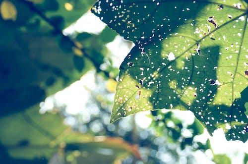 Gratis arkivbilde med dagtid, farger, grønn, grønt blad
