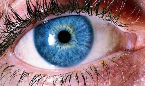 Imagine de stoc gratuită din culori, gene, glob ocular, nuanțe