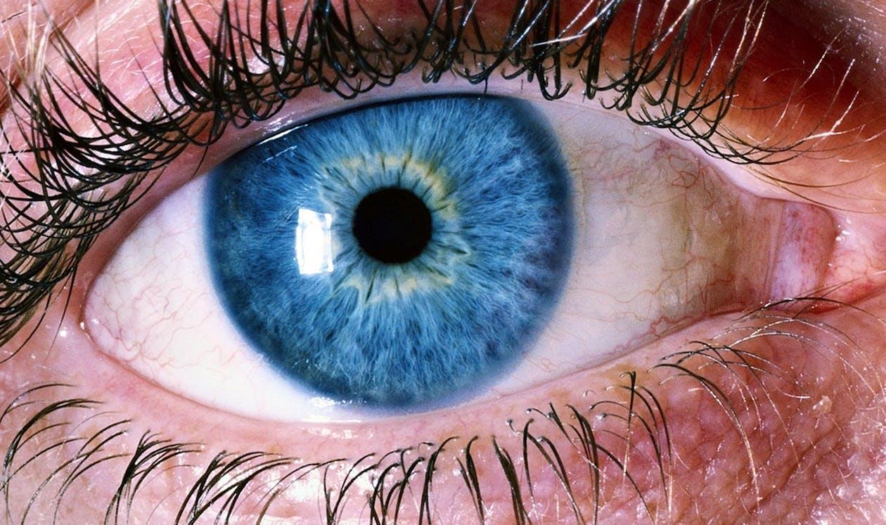 bulbo oculare, ciglia, colori