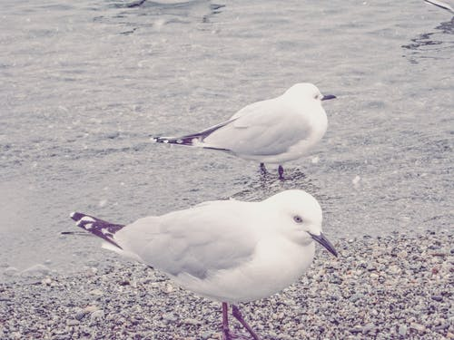 Photos gratuites de créature, mer froide, neiger, oiseaux aquatiques