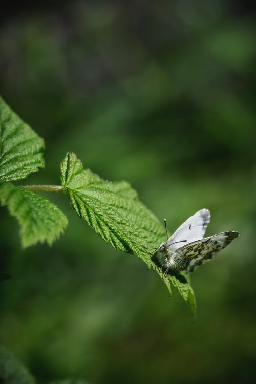 White and Black Butterfly Perched on Green Leaf in Close Up Photography