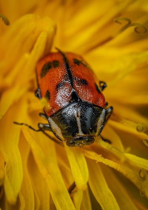 Close up Shot of a Beetle