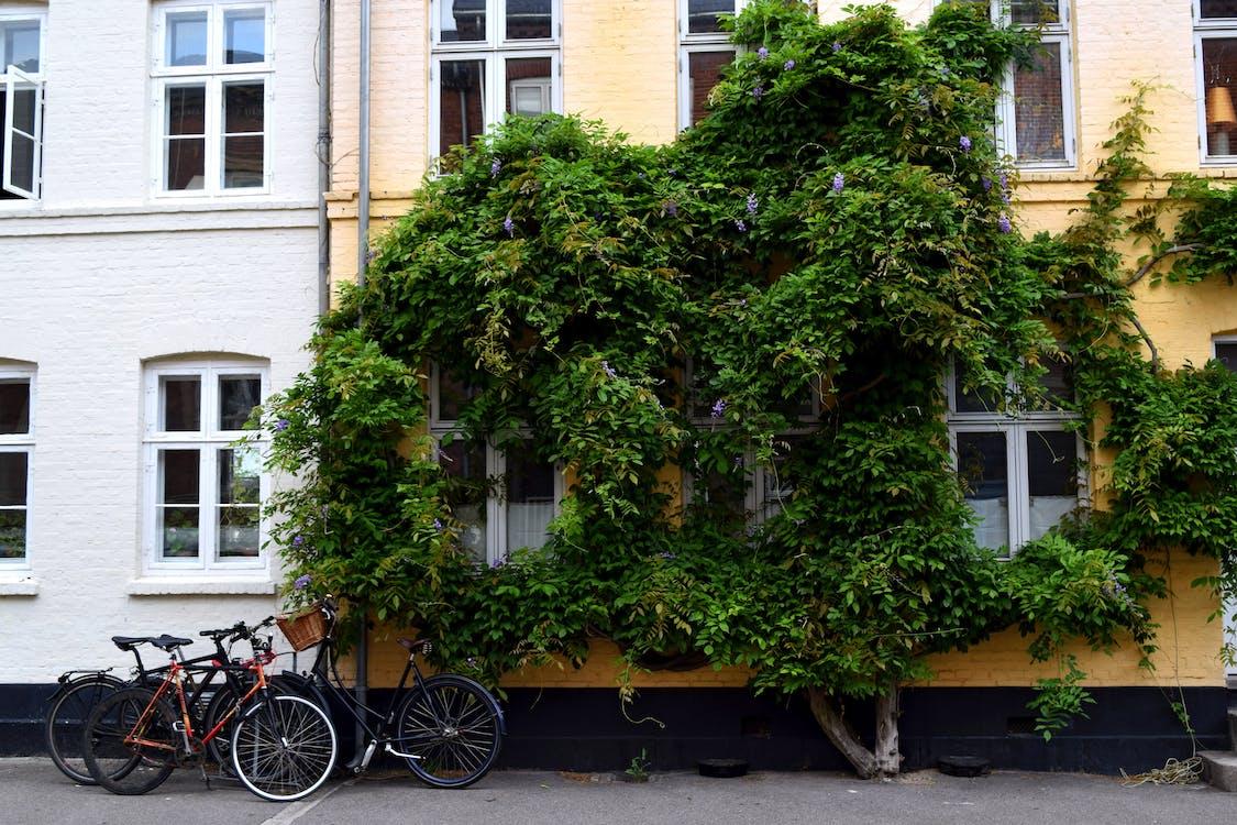 Gratis arkivbilde med københavn, østerbro, sommer