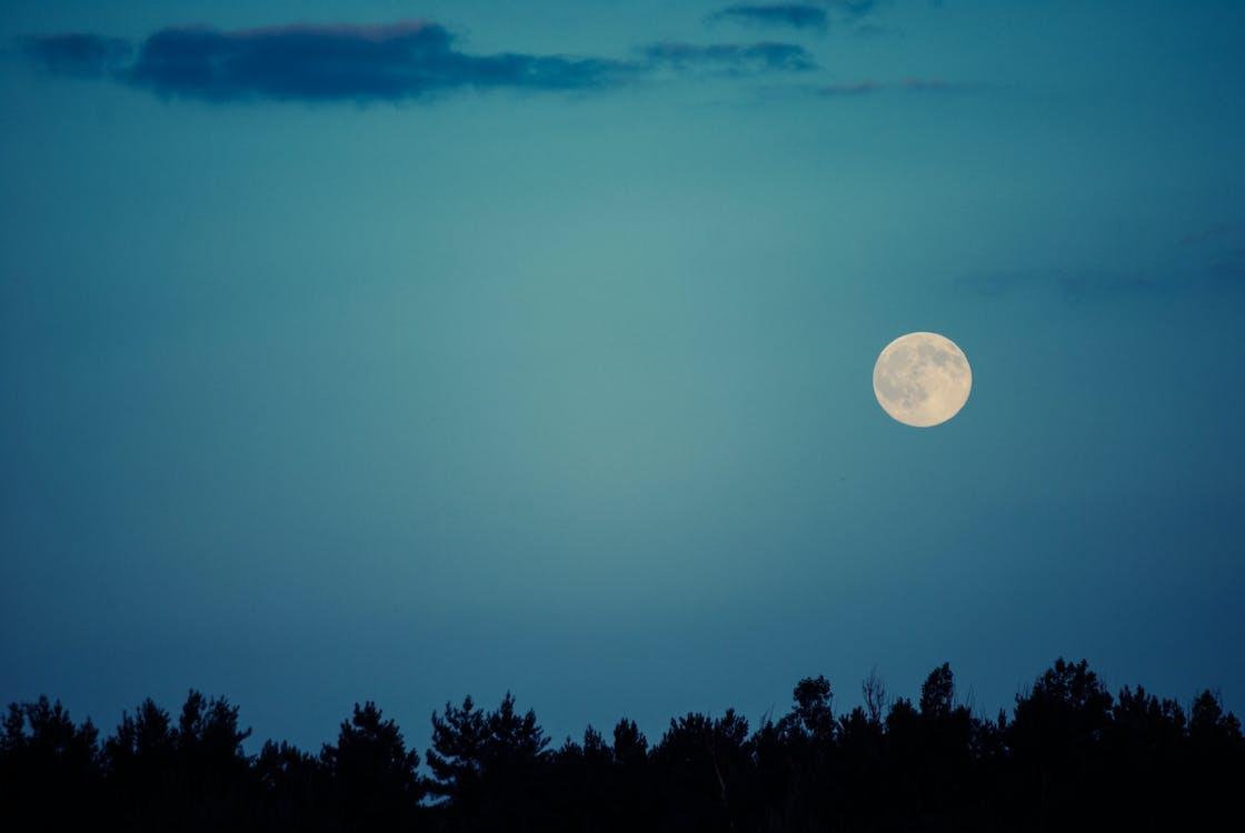 White Full Moon over Trees