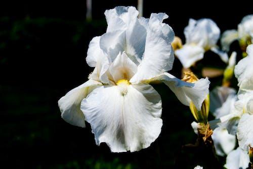 Free stock photo of flower, flower petals, garden
