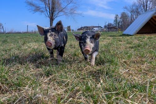 가정의, 가축, 개의 무료 스톡 사진