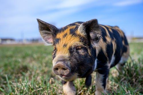 귀여운, 농장, 농지의 무료 스톡 사진