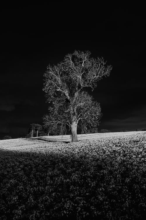 A Leafless Tree in the Middle of the Field