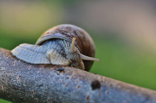 Brown Snail on Brown Wooden Surface