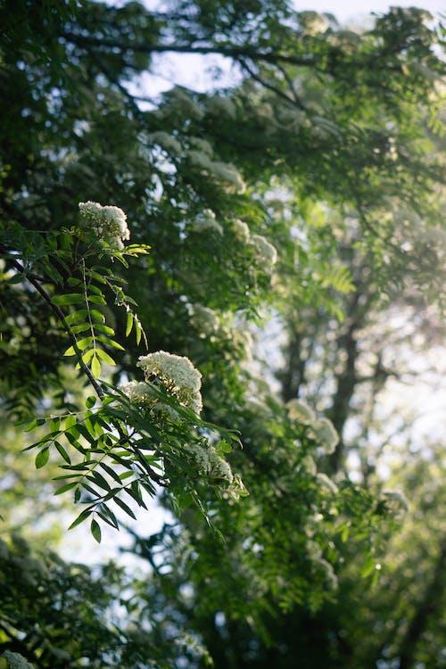 White Flowers on Green Leaves
