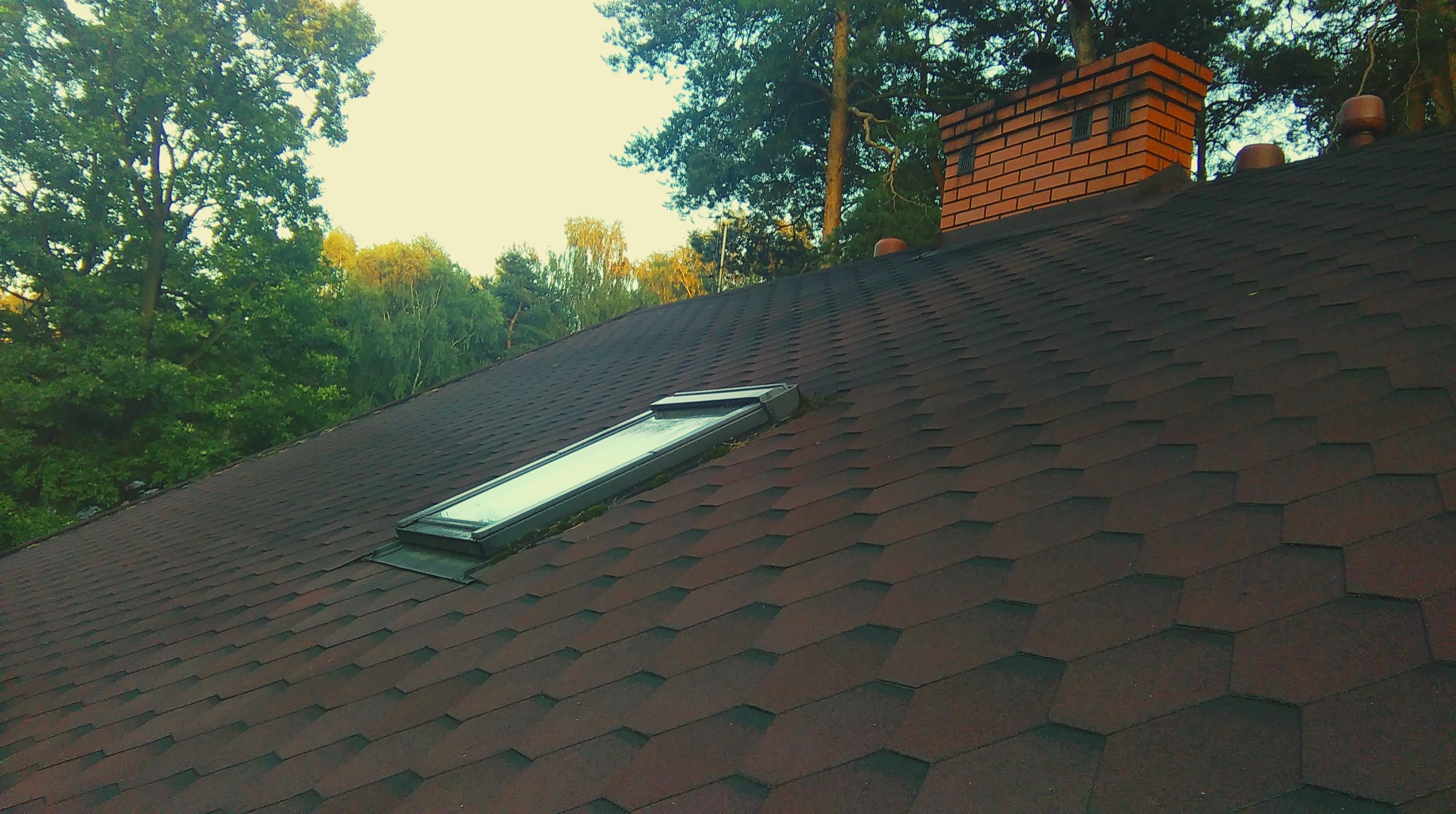 Free stock photo of roof, trees, window